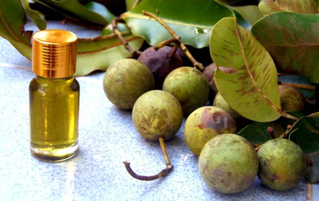 Hướng dẫn cách trị nám với dầu mù u