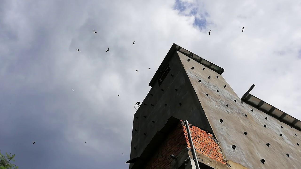 Các phương pháp tác động khi chim yến bỏ đi