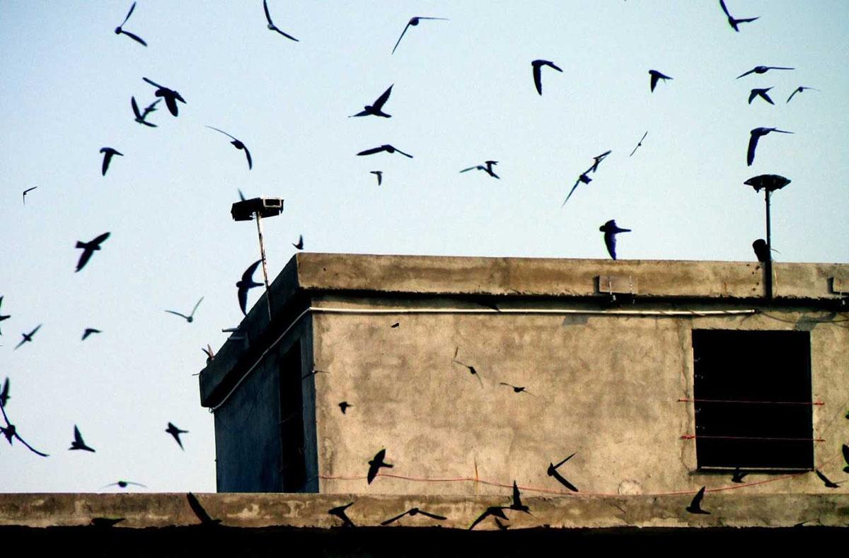 Nguyên nhân chim yến bỏ đi